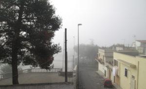 Nebbia che albero e case